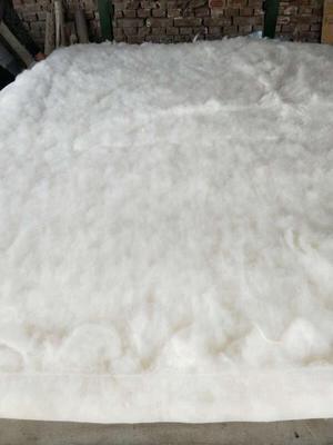 新疆阿克苏新疆棉花