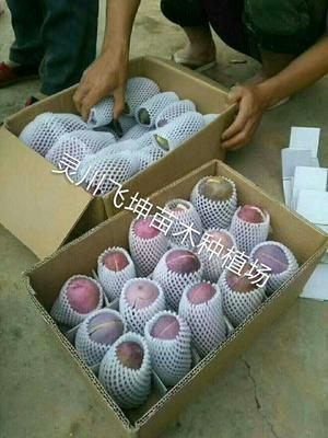 这是一张关于八月瓜苗的产品图片