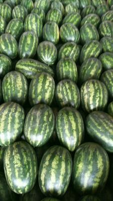 云南德宏p2西瓜 有籽 1茬 8成熟 15斤打底