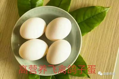 河南郑州信鸽蛋 食用 箱装