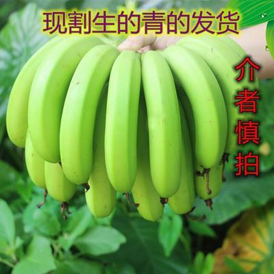 这是一张关于广东香蕉2号 七成熟 40斤以下 每箱净8斤装的产品图片