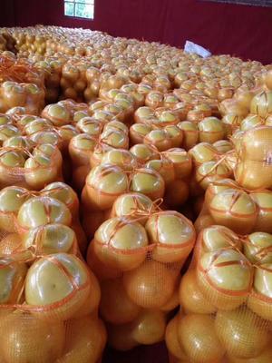 这是一张关于平和蜜柚 2斤以上的产品图片