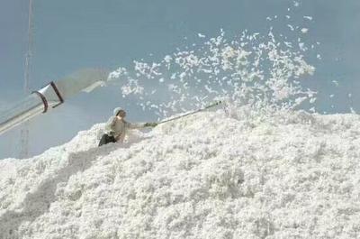 新疆阿拉尔新疆棉花