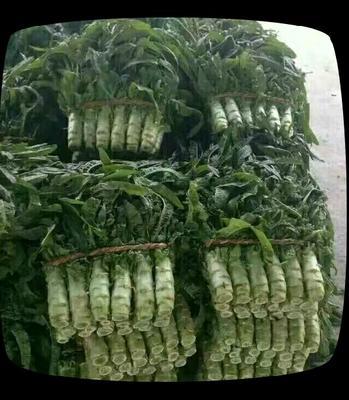 这是一张关于红尖叶莴苣 40-50cm 1.5~2.0斤的产品图片