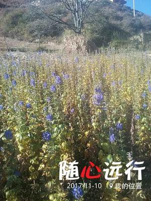 四川省阿坝藏族羌族自治州小金县附子