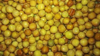 安徽合肥麻豌豆 5-7cm 饱满