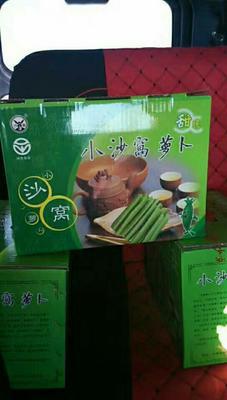 天津西青区水果萝卜 1~1.5斤