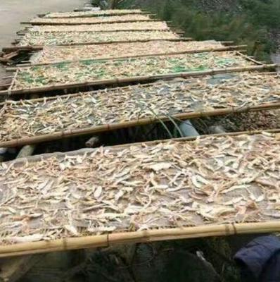 浙江温州水煮笋干 6-12个月