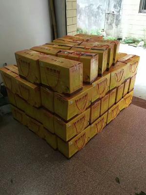 这是一张关于皇帝柑 5.5 - 6cm 2 - 3两的产品图片
