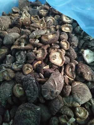 福建省龙岩市新罗区黑面菇干 袋装 1年以上