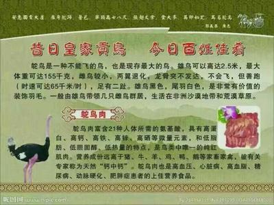 广西桂林鸵鸟肉