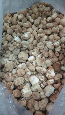 福建宁德野生干猴头菇 散装 1年以上