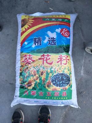 这是一张关于363葵瓜子 6-12个月的产品图片