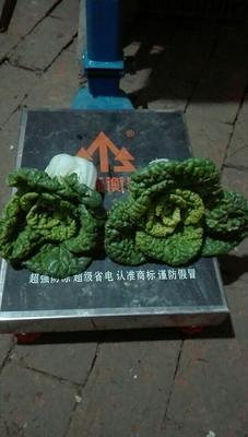 安徽阜阳界首市超级黄心菜