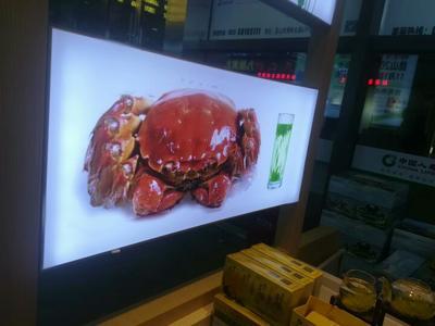 广东广州天河区阳澄湖大闸蟹 2.5-3.0两 母蟹