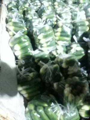 山东省青岛市莱西市青皮绿萝卜 1~1.5斤