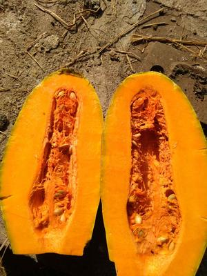 这是一张关于金韩蜜本南瓜 4~6斤 长条形的产品图片