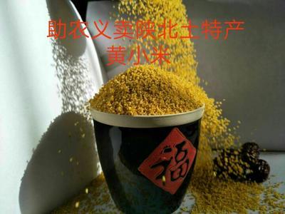 陕西省榆林市佳县黄金贡米