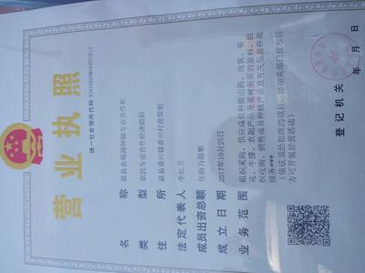 河南郑州铁棍山药 50~70cm