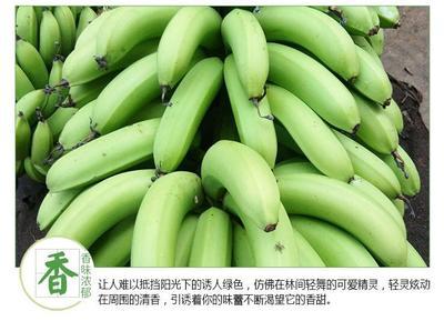 广西百色广西蕉 七成熟 40斤以下