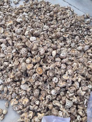 河南省三门峡市灵宝市花菇 3.6 - 4.5cm 混级统货
