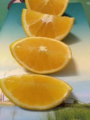 这是一张关于赣南脐橙 70-75mm 4-8两的产品图片