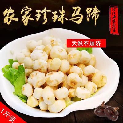 广东阳江珍珠马蹄 小号