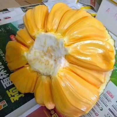 广西崇左越南菠萝蜜 15斤以上