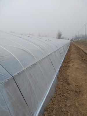 安徽亳州东亚钳蝎 野外大棚生态养殖蝎子天然生长环境