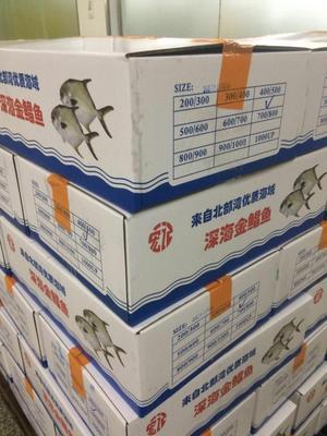 山东潍坊金鲳鱼 野生 0.5公斤以下