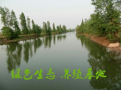 湖南益阳池塘草鱼 人工养殖 0.25-1龙8国际官网官方网站 洞庭湖原生态