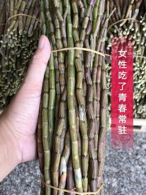 福建漳州铁皮石斛