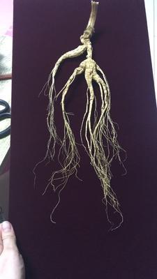 这是一张关于林下参人参 全须生晒参的产品图片