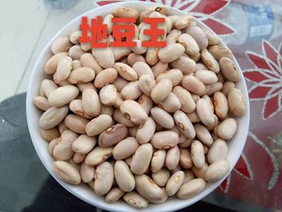 黑龙江齐齐哈尔克东县豆角种子
