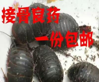 安徽六安霍邱县中华土元