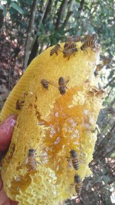 这是一张关于土蜂蜜 玻璃瓶装 98% 1年的产品图片