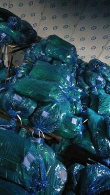 这是一张关于红帽蒜薹 一茬 50~60cm 通货的产品图片
