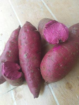 贵州铜仁思南县板栗紫薯 5~6两