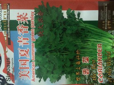 云南昆明官渡区香菜种子