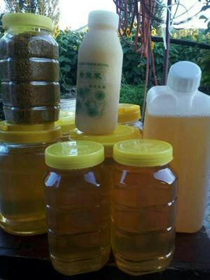 新疆塔城混合蜂花粉 24个月以上