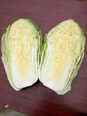湖北荆门傲雪迎春白菜 3~6斤 净菜