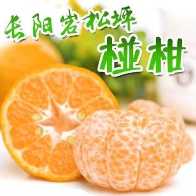 湖北宜昌清江椪柑 6.5 - 7cm 3两以上