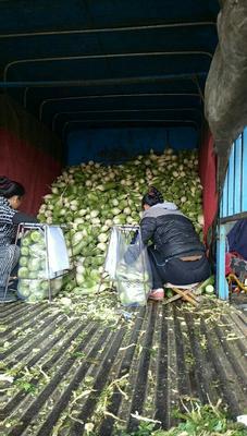 陕西省西安市雁塔区青皮绿萝卜 1.5~2斤