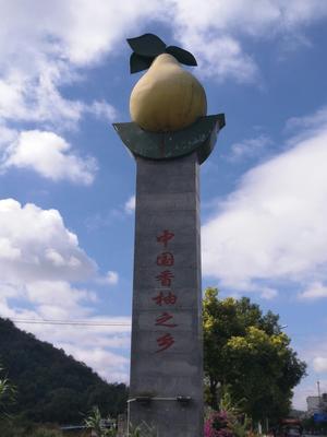 湖南永州沙田柚 1.5斤以上
