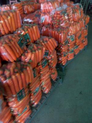 河南开封大红萝卜 0.2~1斤