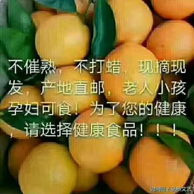 湖北宜昌脐橙 80-85mm 4-8两