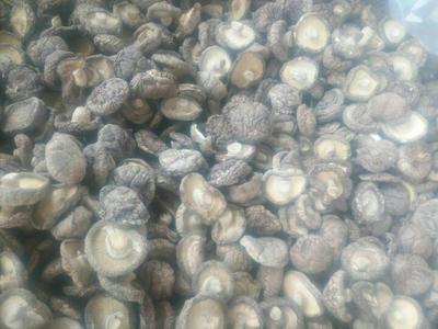 广西百色剪柄香菇 袋装 1年以上