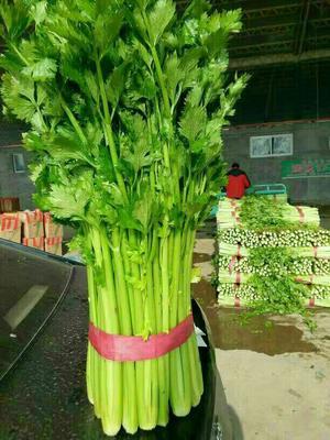这是一张关于法国皇后芹菜 60cm以上 0.5~1.0斤的产品图片