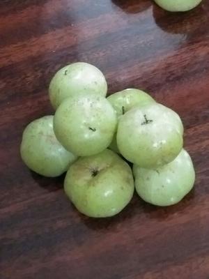 广东揭阳甜种 2cm以上