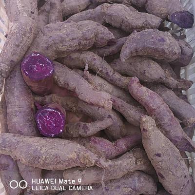 河南焦作越南紫薯 3两以上